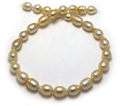 Light Gold South Sea Pearl Necklace